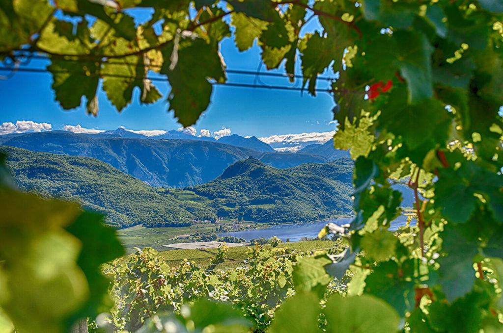 Weingut Niklas er en vingård i det sydlige Tyrol